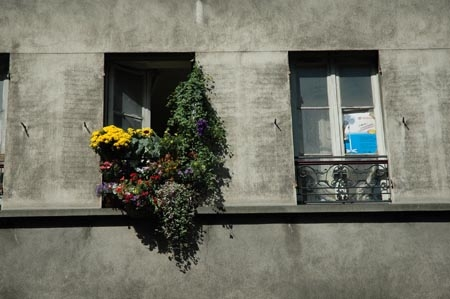 ...Qui s'occupera des fleurs ?