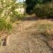 Juin 2004 - le terrain en friche...