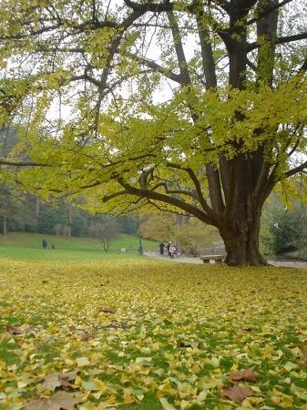 Parc Montsouris - Couleurs d'Automne