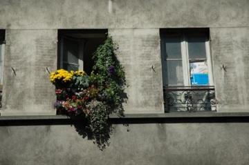 medium_79._le_concours_des_balcons_fleuris.jpg